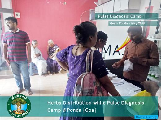 Herbs Distribution at Goa Nadi Chikitsa Camp by AMCT