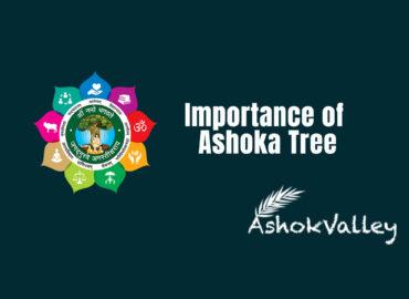 Importance of Ashoka Tree – AshokValley